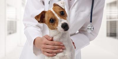 Responsabilité civile professionnelle vétérinaire